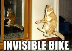 lolcat-invisible-bike