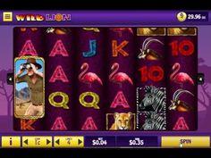 Wild Lion Real Play @ Bingo Cafe