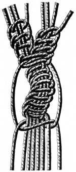 FIG. 591. LARGE SHELL KNOT, OPEN.