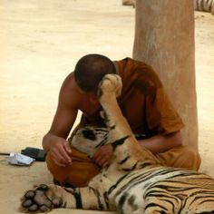 Tiger temple in Tailandia