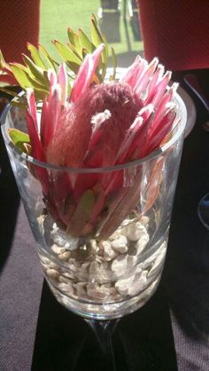 Beautiful Protea table decorations in Kloof Restaurant - by Magrietjies in Citrusdal Mountain Resort, Watermelon, Tables, Restaurant, Table Decorations, Fruit, Beautiful, Food, Mesas