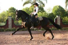 Alter Real stallion Exaustivo