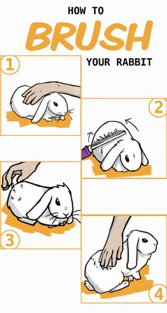 Rabbit Grooming: Brushing, Nail Clipping, and Ear Cleaning - Step-by-step instructions to help you brush your rabbit and shed that excess fur. Pet Bunny Rabbits, Lop Bunnies, Dwarf Bunnies, Cute Baby Bunnies, Rabbit Farm, Rabbit Toys, Pet Rabbit, Bunny Cages, Rabbit Cages