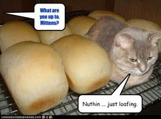 Nothing, just loafing.