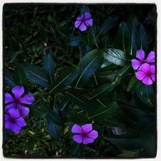 Flores em Itaipava