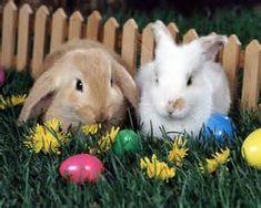 De unos conejos de pascua.