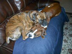 Bristol & Harley napping together
