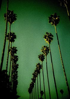 1832170634 Green Palm Trees in Los Angeles, by Misha Ashton Photography. Taken with a  Lomo