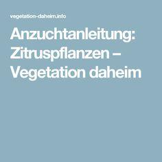 Blühende Kumquats | Zitruspflanzen | Pinterest Richtige Pflege Von Zitruspflanzen