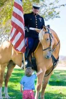 equine-hourglass: In honor of all those who gave their lives; a United States Marine Corps Mounted Honor Guard member on his American mustang. Thank you to all who served, man and equestrian alike. Horse Ears, My Horse, Horse Love, War Horses, My Champion, American Pride, American Flag, American Soldiers, American Girl