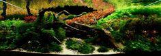 Aquapaisagismo: conheça a arte de transformar aquários em jardins submersos - Mega Curioso