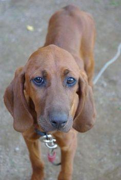"#Lostdog 7-1-14 ""Bella"" #Groton #VT Female Last Seen: Ricker Pond aaphlperkins@gmail.com  https://m.facebook.com/story.php?story_fbid=582174225233166&substory_index=0&id=198608766923049"