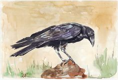 'The Way of the Crow' - W&N watercolour on Bockingford 300gsm Black Crow (Corvus capensis) http://www.redbubble.com/people/mareeclarkson/works/7509437-the-way-of-the-crow?asc=u