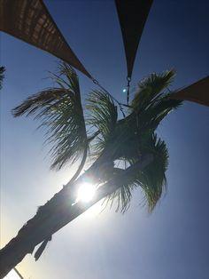 #palmtrees #sun #goodlife #bonaire