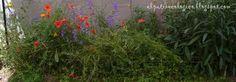 EL PATIO ECOLÓGICO: controlando las flores
