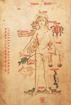 British LIbrary, Man with signs of the zodiac on his body, Egerton 2572, f.50v