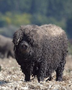 The 15 Most Fluffy And Cute Animals In The World   Blaze Press