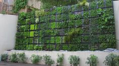 Thumbellina Gardens - San Francisco, CA, United States. Vertical Gardening - Living Wall
