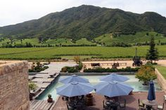 Montes Vineyard, Colchagua Valley, Chile