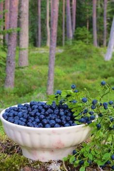 Mustikka-aikaan Finland A blueberry time. Finland Food, Finland Travel, Blueberry Picking, Blueberry Farm, Blueberry Season, Acai Berry, Thinking Day, Helsinki, Fruits And Vegetables