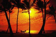 Resultados da Pesquisa de imagens do Google para http://bestsurf.no.sapo.pt/hawai-yashi.jpg