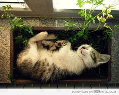 Cat sleeping in a parsley pot