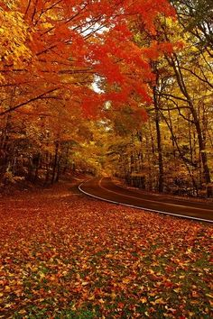 Fall   Buffalo,NY