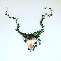Het Geweldige Groene Gewei🦌🌿 www.geweldiggewei.nl link in bio #gewei #deer #antlers #groenegewei #plant #plants