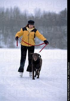 Woman ice skating in snowstorm with chocolate labrador retriever, Westchester Lagoon
