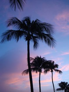 I'm just a palm tree kinda girl! Always have been!