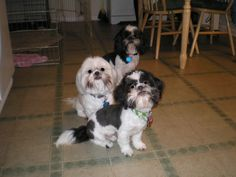 Colby, Ginger and Jimmie