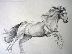 cheval.jpg (1067×800)