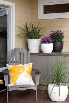 The best plants for potted winter colour Winter Potted Plants, Large Plants, Cool Plants, Cymbidium Orchids, Delphinium, Moth Orchid, End Of Winter, Peace Lily, Room To Grow