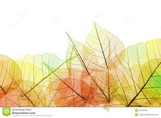 border-autumn-color-transparent-leaves-isolated-white-background-44058786.jpg (1300×957)