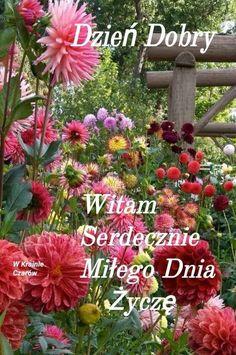Dzień dobry Good Morning, Spring, Plants, Funny Stuff, Good Day, Bonjour, Bom Dia, Flora, Plant