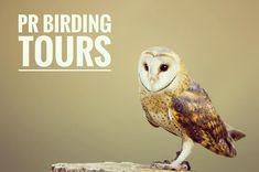 Contour Air AB samarbetar med PR Birding Tours för naturresor där fågelskådning är i fokus! 2018 går resorna till bl.a. Mallorca Albanien Sydafrika och nord-Norge.  #contourairse #litemeravallt #pin #birdwatching #fågelskådning #barnowl #välkomnavärlden #paketresor #rundresor #specialresor #restips #semester #bokaresa