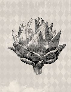 Artichoke graphic download Image No.497 by TanglesGraphics on Etsy, $1.00