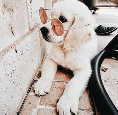 Gifts For Dog Lovers Gifts For Dog Lovers :) for Cute dogs and puppies Cute Baby Animals, Animals And Pets, Funny Animals, Cute Puppies, Cute Dogs, Dogs And Puppies, Doggies, Cute Creatures, I Love Dogs