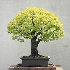 It's like the perfect tree shape.