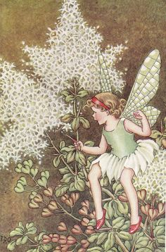 Illustration by Ida Rentoul Outhwaite - fairy Cicely Mary Barker, Elves And Fairies, Vintage Fairies, Beautiful Fairies, Flower Fairies, Fairy Art, Fantasy Creatures, Illustrators, Fantasy Art
