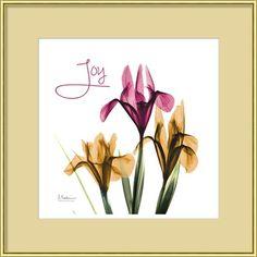 Xray flowers photography - Pink Iris Joy art print at ArtPrintsforHomeDecor.com