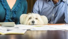 17 Tax Deductions for Dog Owners in 2017