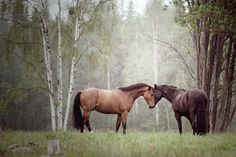 #Horses are just so beautiful. Ad the misty scene makes this such an awesome photo