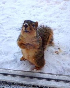 This squirrel wants to come inside out of the snow!
