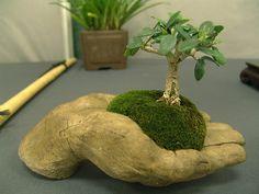 mame bonsai & kokedama gardening Really like the look of the palm holding a tree. Bonsai Plants, Bonsai Garden, Garden Trees, Garden Art, Garden Design, Bonsai Trees, Air Plants, Cactus Plants, Ikebana