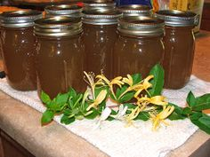 Canning Granny: Wild Honeysuckle Syrup (for cough)