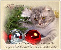 vánoční blog