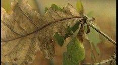 Herfstblaadjes Plant Leaves, Plants, Classroom, Autumn, Education, Biology, Hand Spinning, Fall, Flora