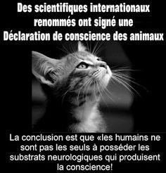 """L'Univers de Thalys - Réflexion et Philosophie: d'éminents scientifiques ont signé la """"Déclaration de Cambridge sur la Conscience"""" reconnais..."""