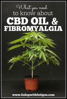 "What you need to know about CBD oil and fibromyalgia. I hope you find a solution. For legal pain relief, naturally sounds good!! premium UK Cannabidiol ""CBD"" Oils and CBD vape e-liquids. Share and like them at on.fb.me/1ivWE4K Try it ?"